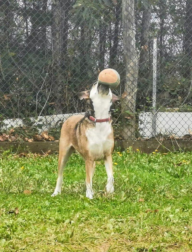 Luna – adottata