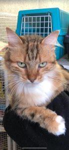 Insufficienza renale nel gatto 1