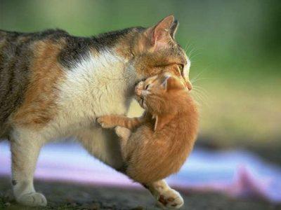 Cuccioli e Mamma Gatta