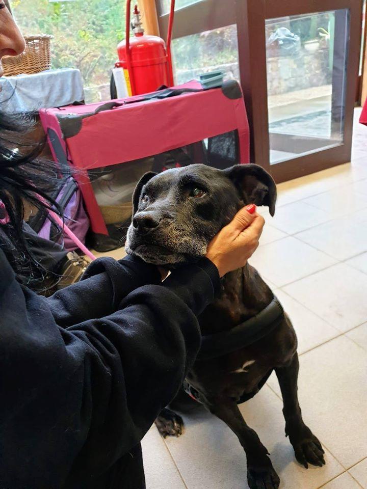 Lina – adottata