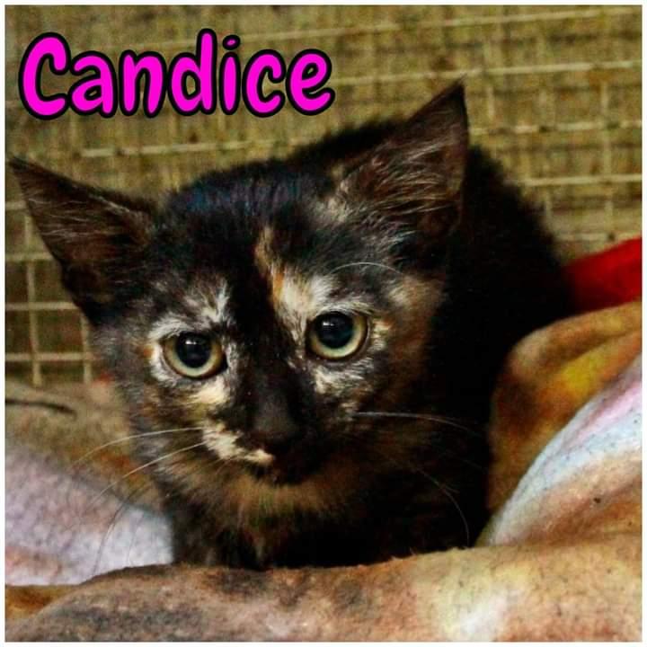Candice & Tiffany – adottate
