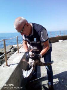 Guardie Zoofile - Termanini Gian Lorenzo