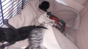 Sterilizzazione Gatti 2